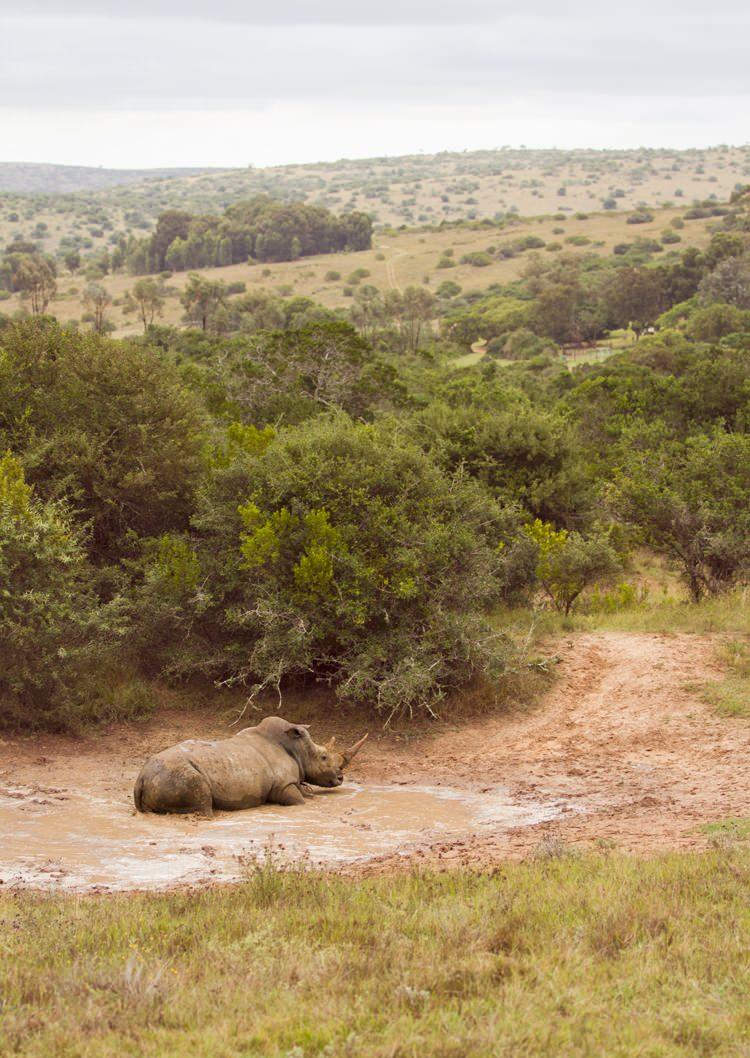Les avantages d'un safari avec safarivo